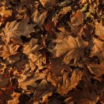 Free stock photo Full frame shot of autumn leaves on the ground