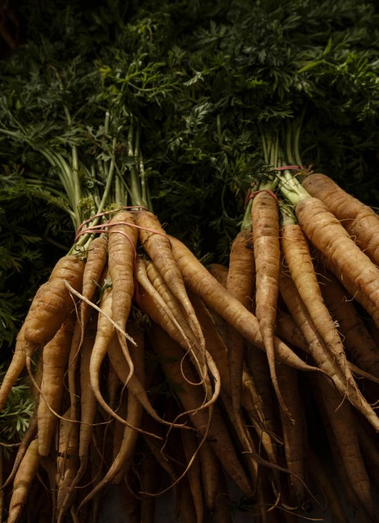 Free stock photo Close-up of carrots