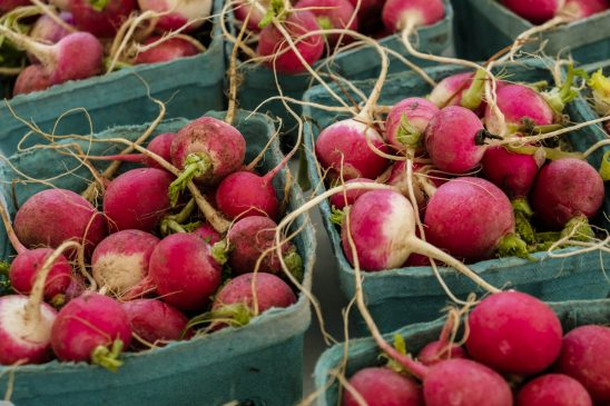 Free stock photo High angle view of radishes in containers