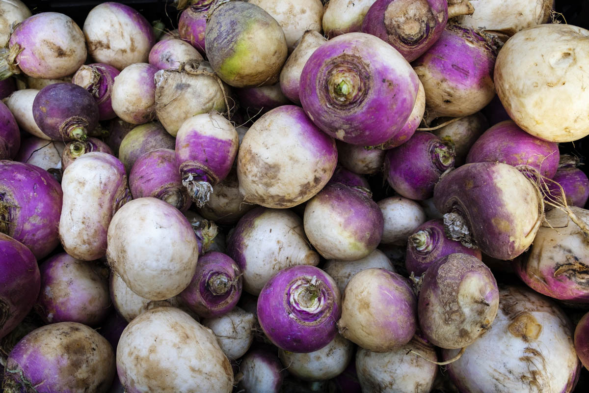 Free stock photo Full frame shot of turnips