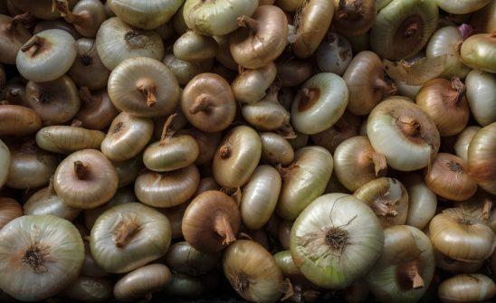 Free stock photo Full frame shot of white onions
