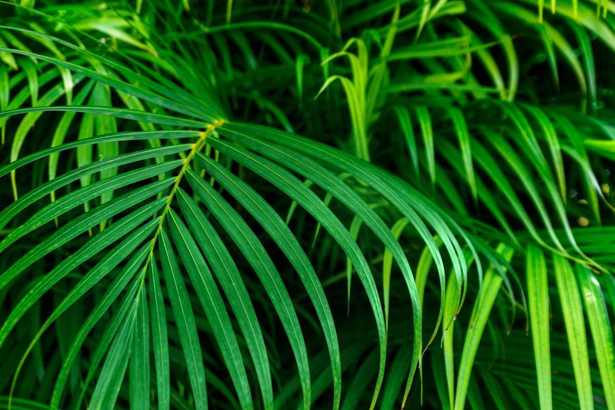 Free stock photo Close-up of fresh green leaves