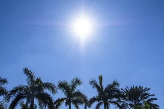 Free stock photo Sun shining over palm trees against blue sky