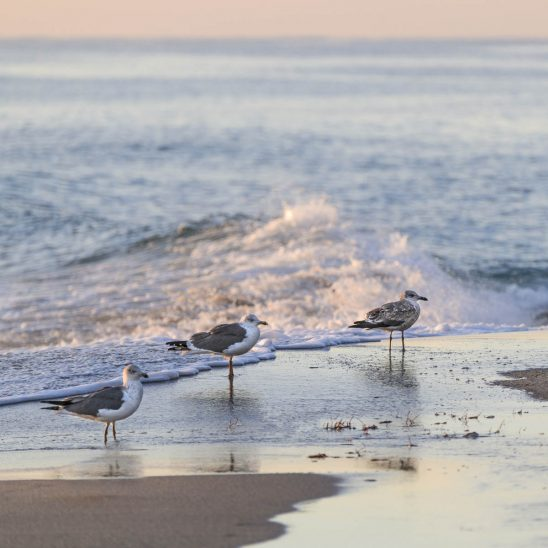 Free stock photo Seagulls perching on shore at beach