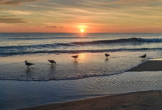 Free stock photo Seagulls on shore at beach against sky during sunset