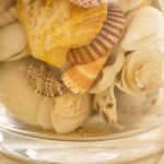 Free stock photo Close-up of seashells in glass jar