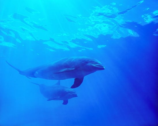 Free stock photo Low angle view of dolphins swimming in sea