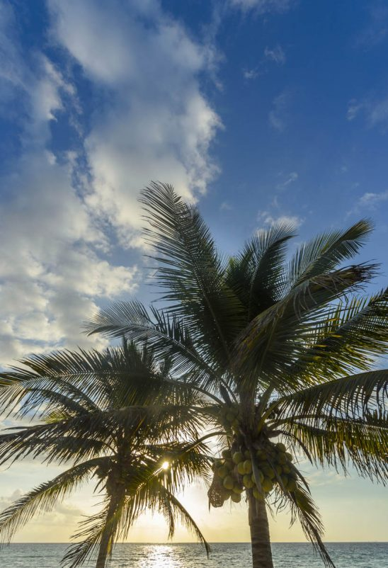 Free stock photo Low angle view of coconut palm trees at beach