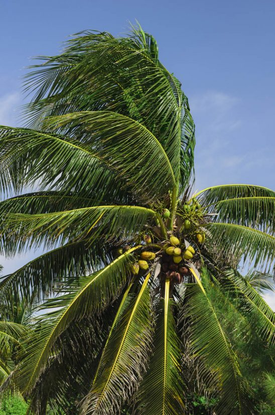Free stock photo Low angle view of coconut palm tree against sky