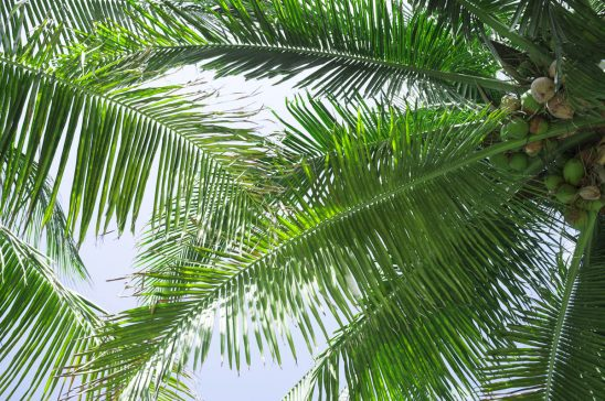 Free stock photo Low angle view of coconut palm trees against sky