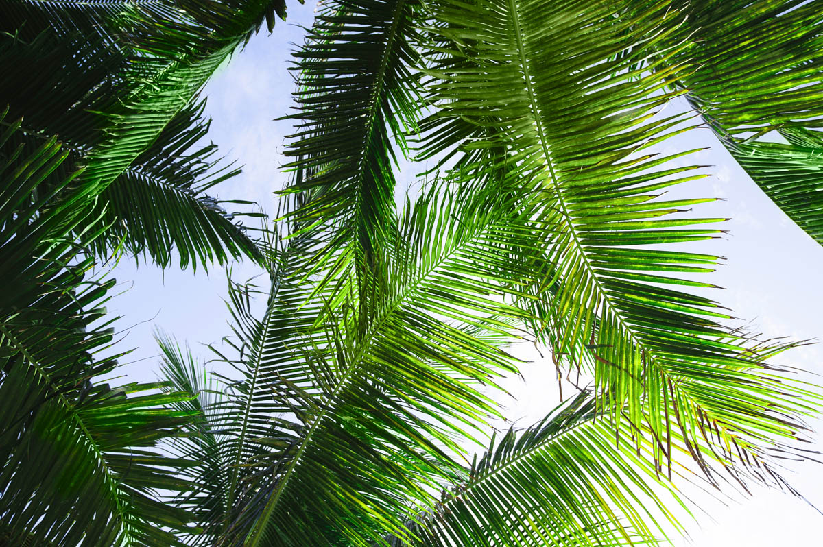 Free stock photo Low angle view of palm leaves against sky