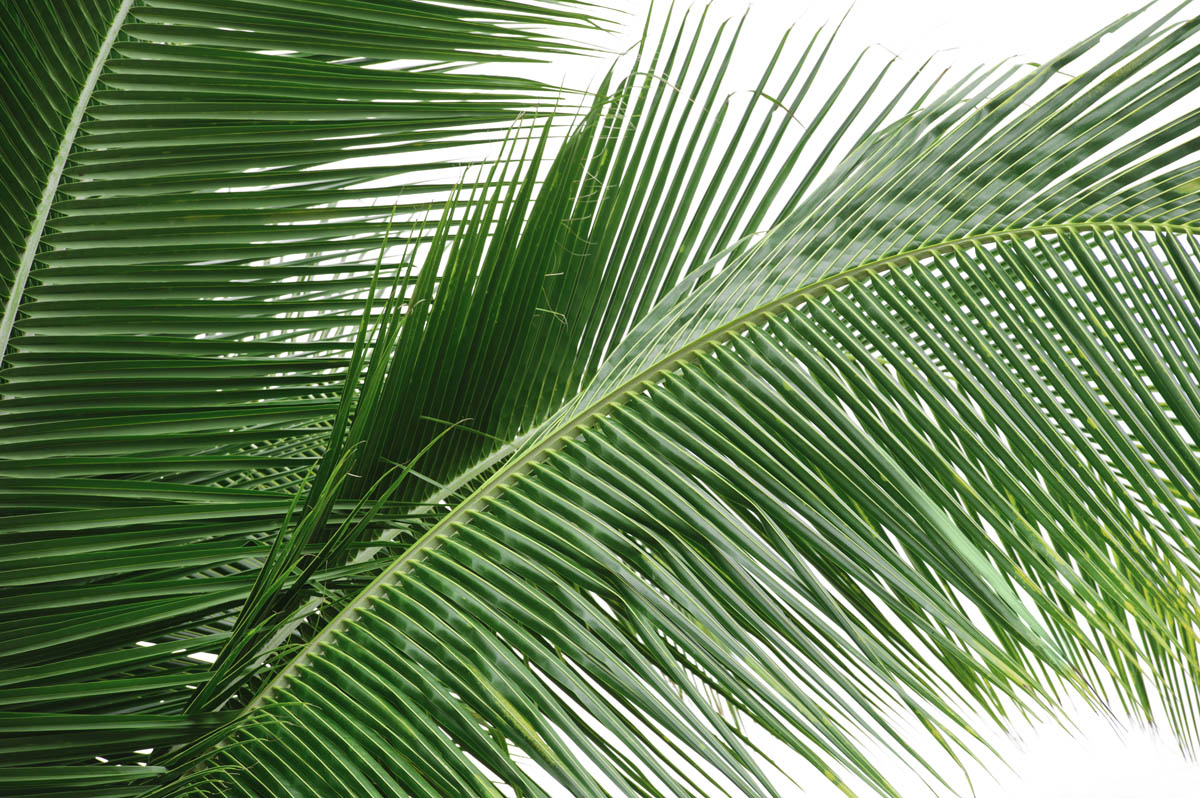 Free stock photo Close-up of palm leaves against sky
