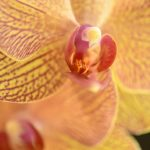 Free stock photo Close-up of orchid flower
