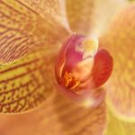 Free stock photo Close-up of red and yellow orchid flower