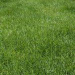 Free stock photo Lush green lawn