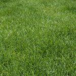 Free stock photo Lush green lawn