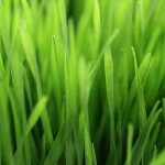 Free stock photo A close up view of grass.