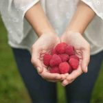 Free stock photo Midsection of woman holding raspberries