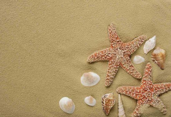 Free stock photo Close-up of starfish and seashells on sand
