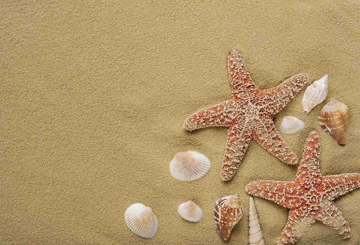 Free stock photo Close-up of starfish and seashells on sand