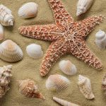 Free stock photo Close-up of starfish with urchin and seashells on sand
