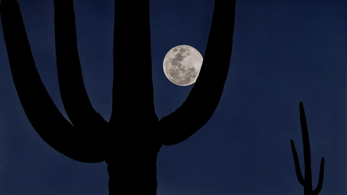Free stock photo Silhouette of cactus with a full moon