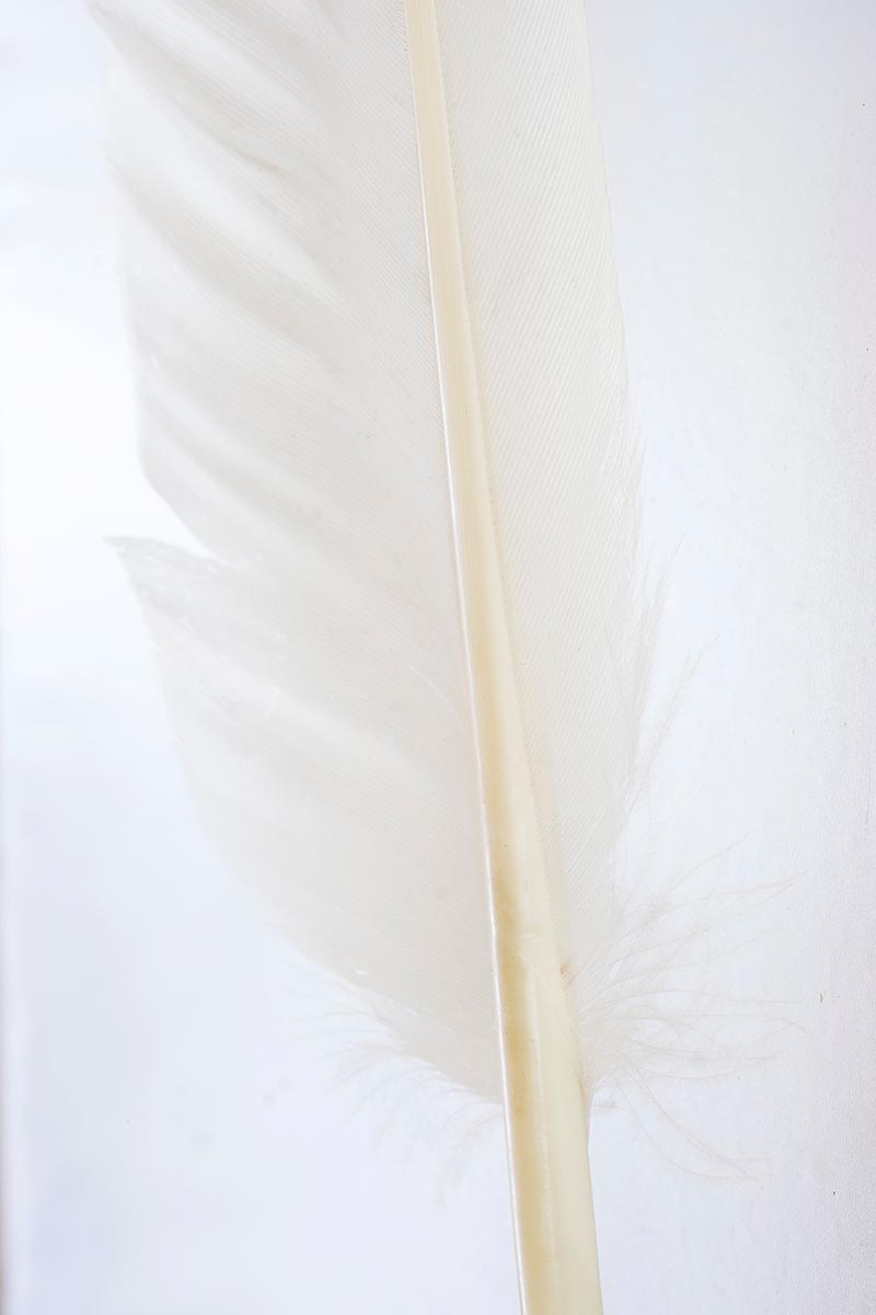 Free stock photo High key backgroud photo of a white feather