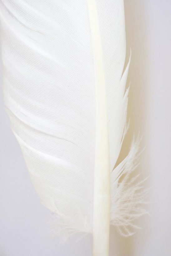 Free stock photo Graphic close up of a white feather on a white background