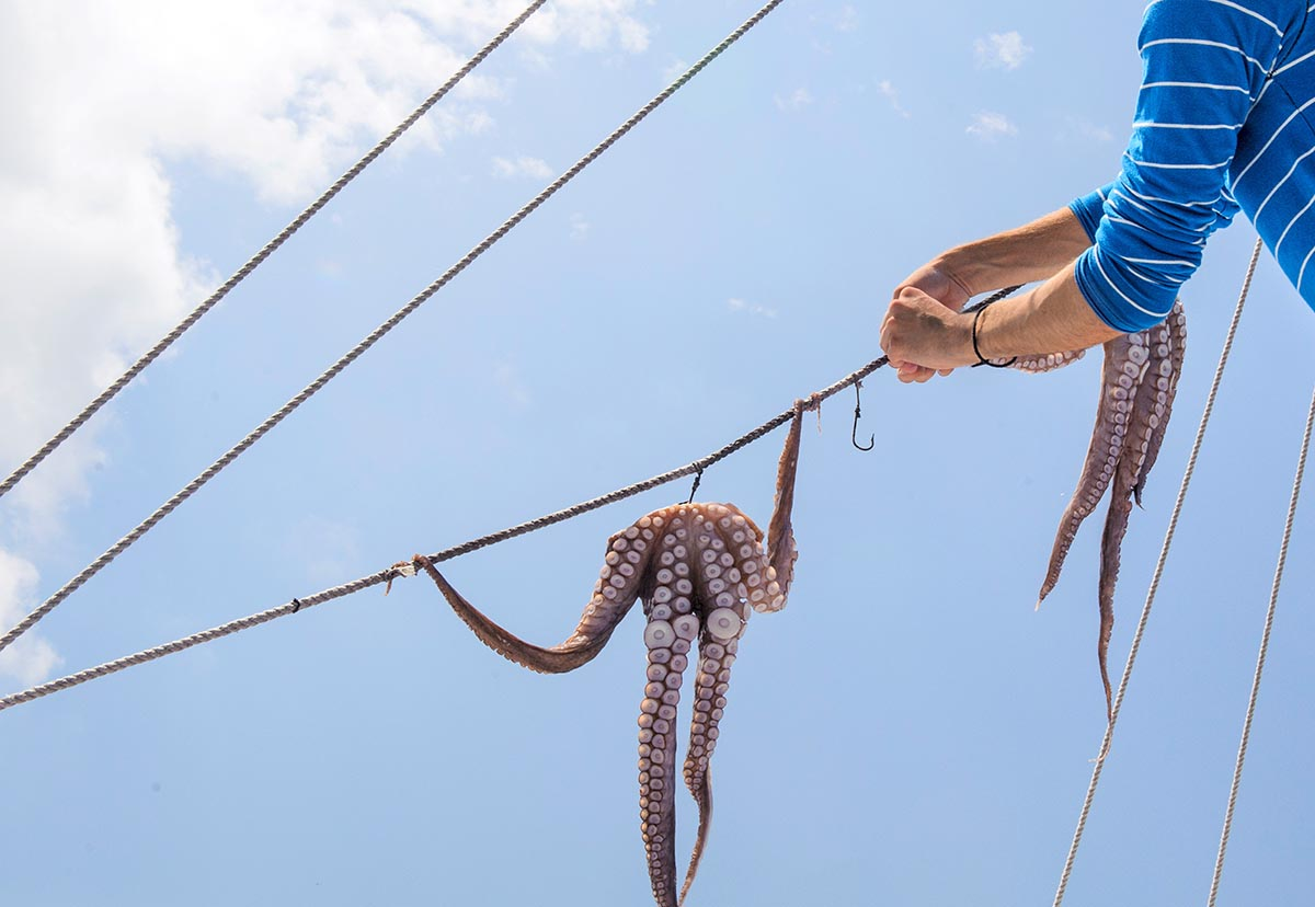 Free stock photo Greek fisherman hanging octopus out in the sun