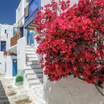 Free stock photo Flowering red bush on a side street in Mykonos, Greece