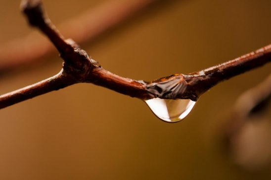 Free stock photo Close up of a rain drop on a tree branch