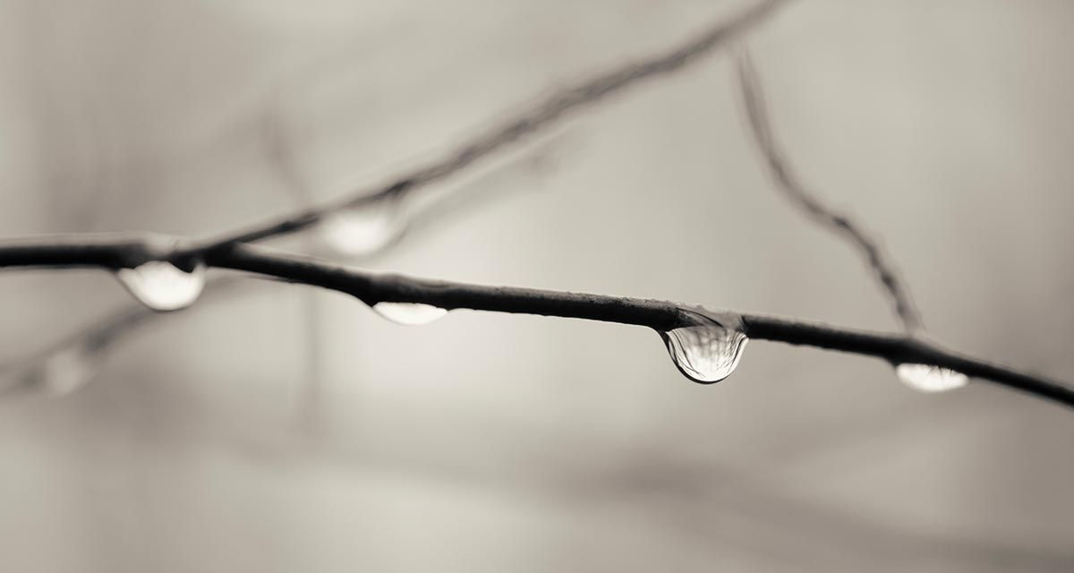 Free stock photo Rain water drops on tree branch