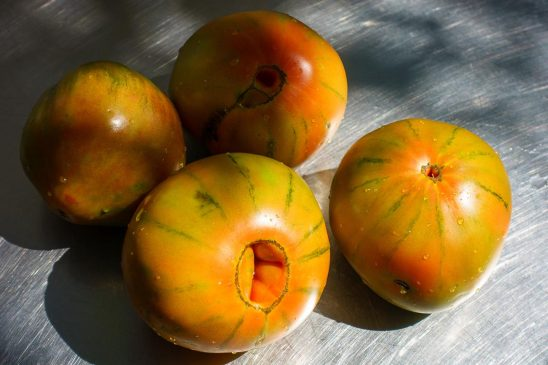 Free stock photo Group of heirloom tomatoes