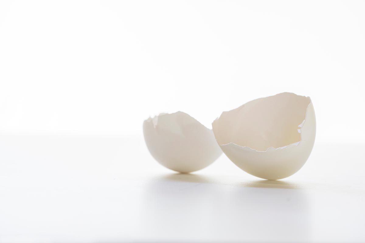 Free stock photo Broken eggshell on a white background