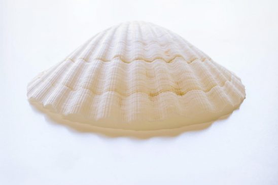Free stock photo White scallop shell on a white background