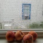 Free stock photo Over-ripe peaches on a rainy day