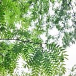 Free stock photo Background pattern of green leaves