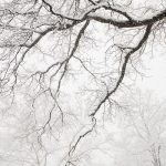 Free stock photo Falling snow covering barren winter trees