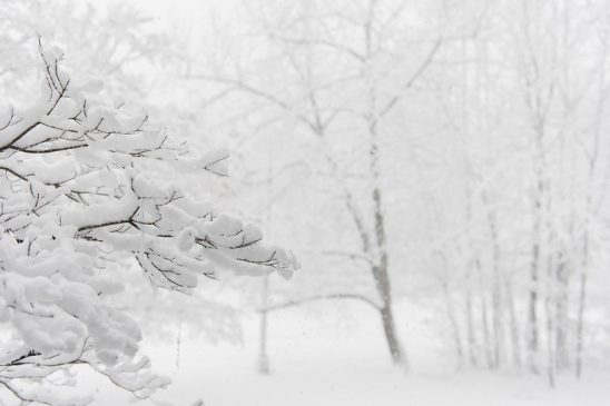 Free stock photo Winter tree branch covered in snow against a white snowy background