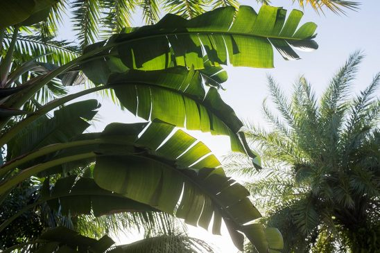 Free stock photo Palm leaves in a tropical forest