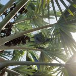 Free stock photo Palm leaves with sun flare