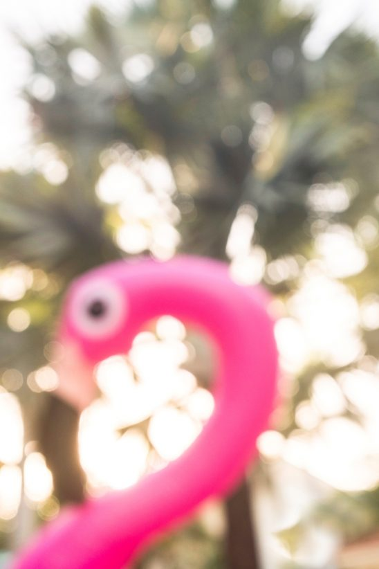Free stock photo Defocused view of a plastic flamingo head