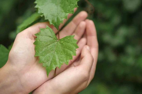 Free stock photo Close-up of hands holding wet leaf