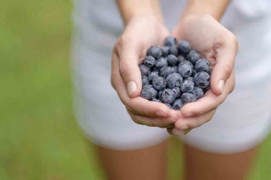 Free stock photo Close-up of hands holding blueberries