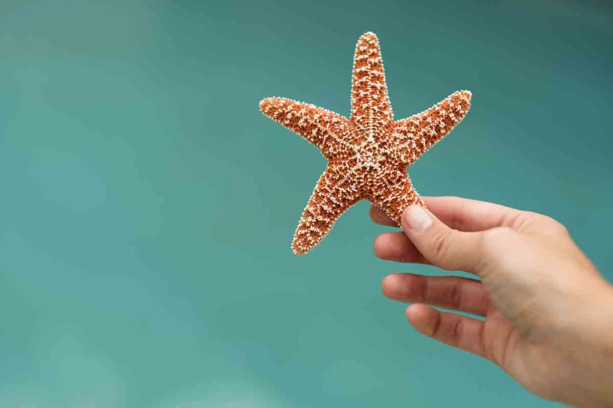 Free stock photo Close-up of hand holding starfish against sea