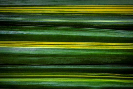 Free stock photo Pattern background of striped tropical leaves