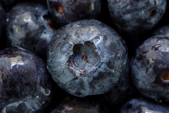 Free stock photo Close up of a blueberries