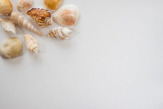 Free stock photo Group of seashells framing a white space