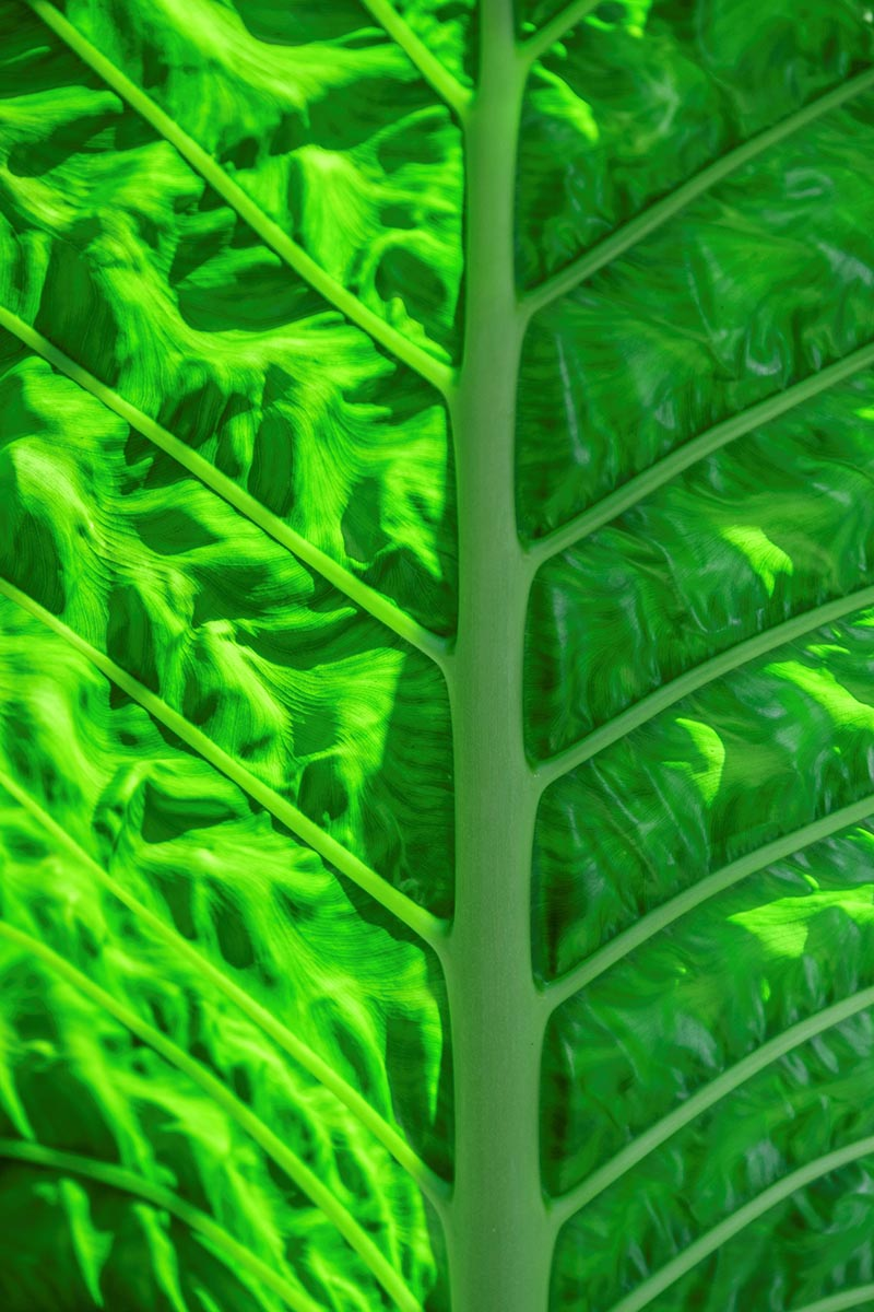 Free stock photo Close up of a palm leaf