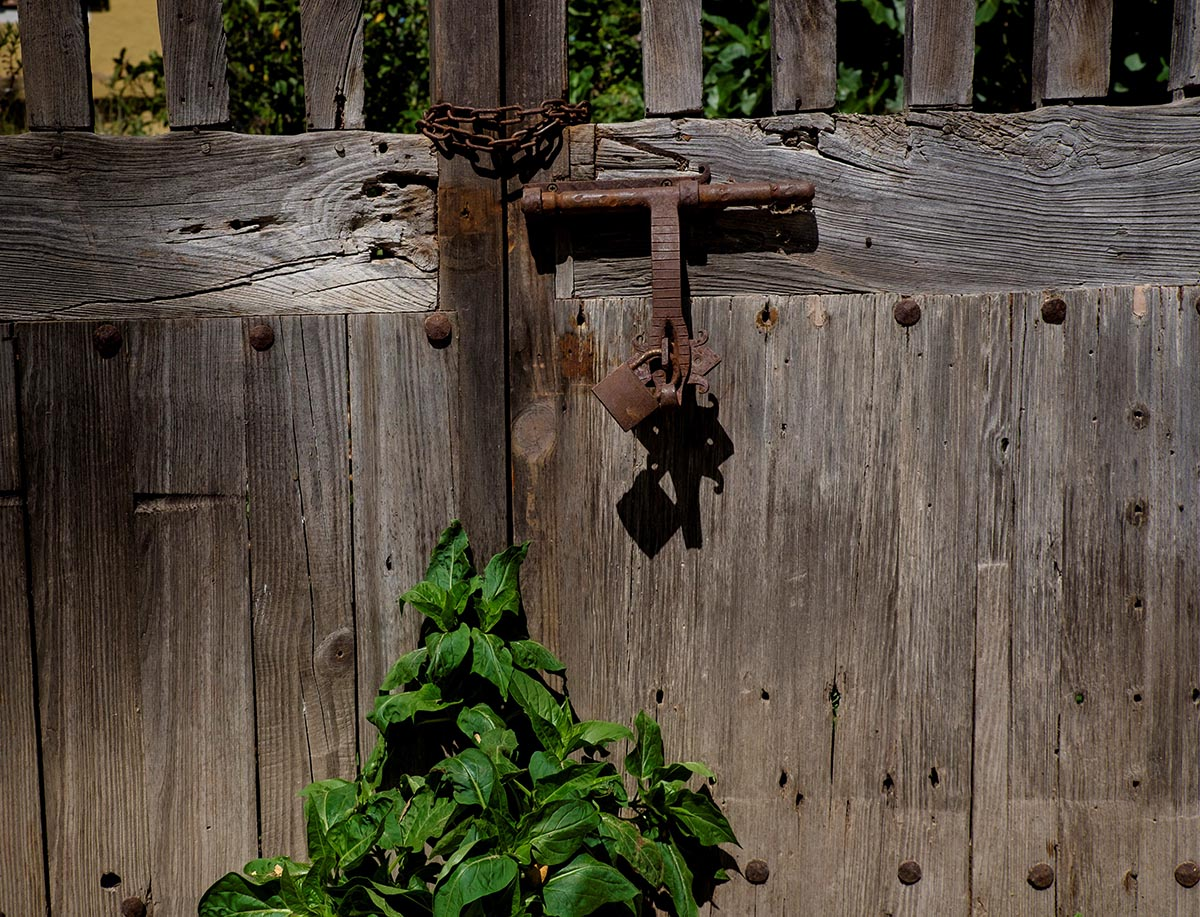 Free stock photo Old locked wooden gate with ivy in Valldemossa, Spain